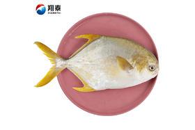 【京东】翔泰 冷冻无公害金鲳鱼 800g/袋 1条装 BAP认证 海鲜水产【蛋肉熟食】