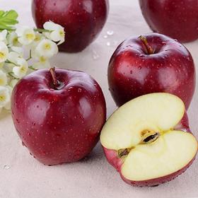 当季上新 | 礼县花牛蛇果红苹果 酸甜可口 健康美味 富含人体所需微量元素 产地新鲜直达
