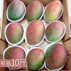 四川攀枝花凯特芒果新鲜特大青芒果带箱10斤现摘应季水果批发包邮