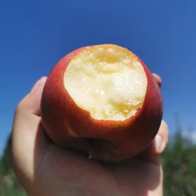 四川 • 大凉山糖心红将军苹果 酸甜脆爽 果香多汁  色泽鲜艳 现摘现发 来自大凉山的美味
