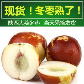 陕西 • 大荔冬枣 果型端正 颗颗饱满 新鲜采摘 口感爽脆 不催熟 不打药 颗颗人工采摘