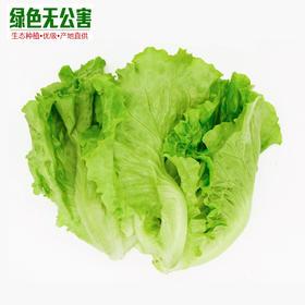 生菜 3元/斤 生态种植 无公害 四季生菜 意大利色拉菜 沙拉菜-835158