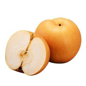 当季上新 | 山东烟台秋月梨 肉脆多汁 甘甜可口 皮薄核小 产地新鲜顺丰直达 5斤装