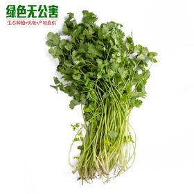 1037-香菜