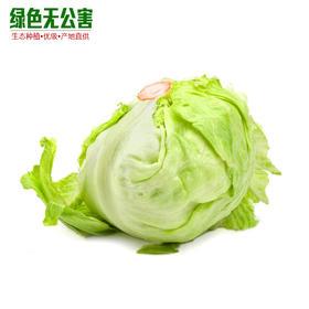 1053-球生菜