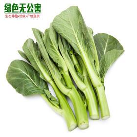 广东菜心 2.7元/斤 生态种植 无公害 叶菜 新鲜蔬菜-835164