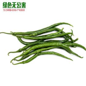 1137-绿线椒