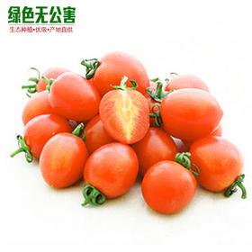 1124-小西红柿(桔)