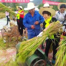 安阳镇陈营村收割节