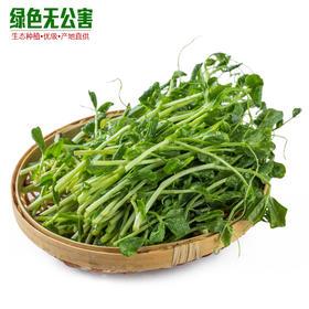 1057-豌豆苗