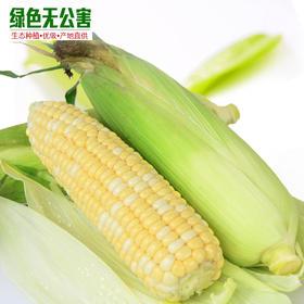 1165-甜玉米