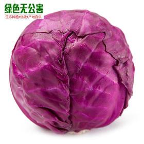 1061-紫甘蓝