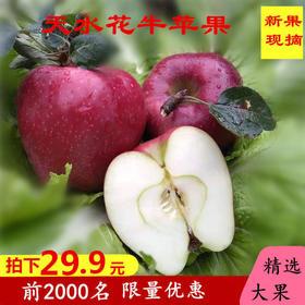 甘肃天水花牛苹果粉苹果可刮泥婴儿水果蛇果新果大果带箱10斤