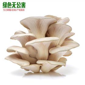 1166-平菇(一级)