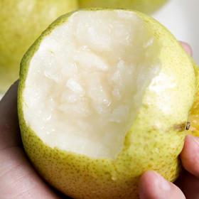 5斤装砀山酥梨 圆润饱满 皮薄多汁 酥脆甘甜