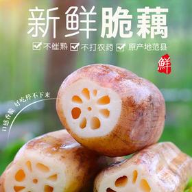 当季上新 | 范县莲藕 肥大光滑 银白嫩肉多汁 藕香浓郁 产地现挖新鲜直达 5斤装