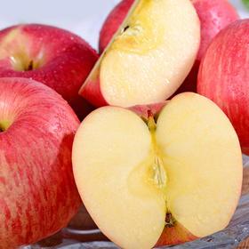 当季上新   礼泉红富士苹果 皮薄多汁 肉质紧致 清甜脆口 5-10斤装