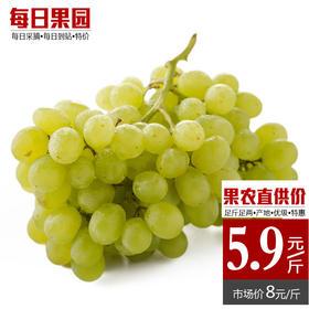 新疆无核白葡萄 精选1.5斤装 新鲜水果-835024