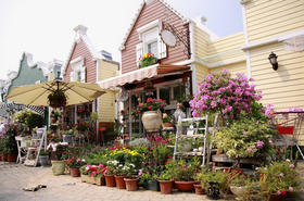 10.27【与花为伴】荷兰风情小镇,童话般的花花世界。