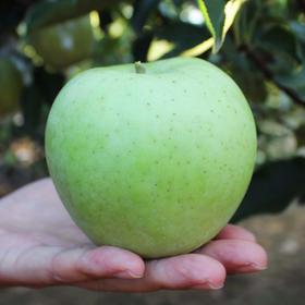 【雀斑美人王林苹果】清脆爽口 个大饱满 酸甜多汁5斤装包邮