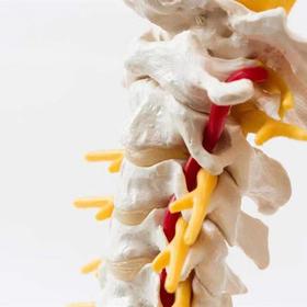 脊柱检查套餐