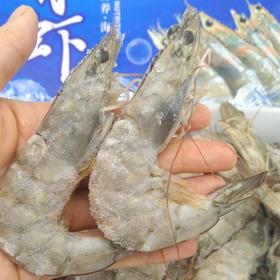 【半岛商城】厄瓜多尔盐冻青虾 活体盐冻 不带冰 净重3.6斤 40-50规格 肉质紧实 Q弹口感