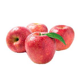 汶川冰糖心苹果 5斤装