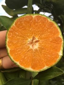 【时令鲜果】丹江口市武当蜜橘5斤装  外地客户专享