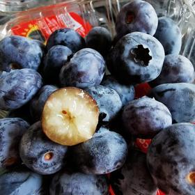 【半岛商城】进口大蓝莓 酸甜脆爽 果粉无限好 4盒装*125g
