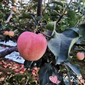【半岛商城】红脸苹果 口感脆 甜度高 香气独特 9-11枚/6斤/组 省内包邮