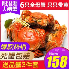 【顺丰包邮】阳澄湖大闸蟹螃蟹约2.2两全母蟹6只礼盒赠品蟹3件套