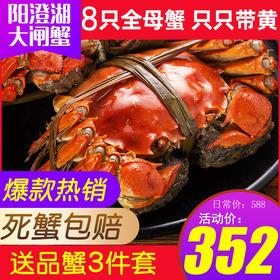 """【顺丰包邮】阳澄湖大闸蟹螃蟹约2.5两全母蟹8只""""财源广进""""礼盒装赠品蟹3件套"""