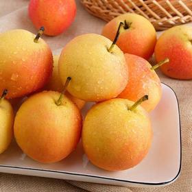 正宗东北特产南果梨 新鲜水果梨5斤装包邮当季梨香水梨鞍山南国梨