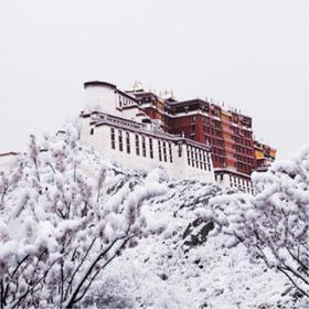 """【藏地新年】2020去西藏过大年,体验西藏""""风情""""撒欢儿年经典8日游!"""