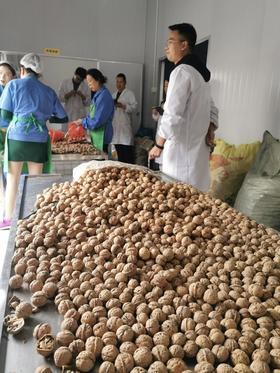 【特价】乡城扶贫老核桃,10斤100元!来自人间净土,最纯净很好吃的核桃。