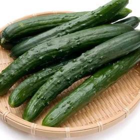 川农牛直供黄瓜 5斤