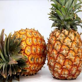 云南西双版纳 泰国品种 香水小菠萝 酸甜可口 送刀具 5斤
