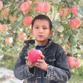【【阿克苏冰糖心苹果】红旗坡核心产区 10斤装 顺丰包邮