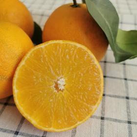 【半岛商城】爱媛果冻橙爆汁橙 毛重13斤/筐 大果 省内包邮 2019年新上市