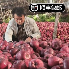 甘肃花牛蛇果红苹果10斤 清甜可口 健康美味 富含人体所需微量元素 顺丰包邮