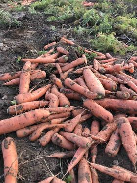冬储菜4个品种10斤组合