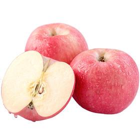 山东威海红富士苹果|当季采摘 现摘现发 脆甜可口|5-9斤装|【严选X水果蔬菜】