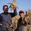 2020年新小米 陕北米脂小米 农家月子米 现磨现发 5斤装 商品缩略图5
