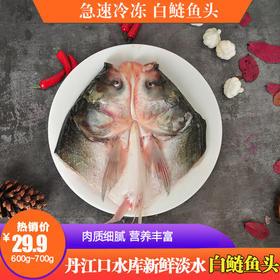 【生鲜特产】丹江口新鲜淡水鱼丨野生白鲢鱼头
