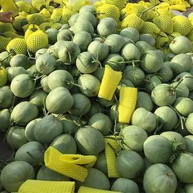 山东绿宝甜瓜新鲜水果10斤应季小香瓜脆瓜