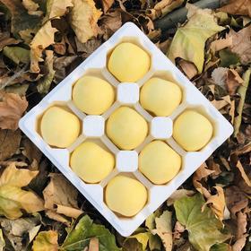 【金雪果】晚摘50天 透骨的清甜香脆 黄金的冰糖心苹果 5斤9颗装礼盒