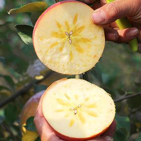 优选丨新疆阿克苏冰糖心苹果 甘甜味厚 汁多无渣  5斤装 新果  包邮(除偏远地区)