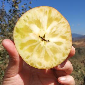全年日照长达3000小时 冰糖心苹果 盐源丑苹果 清甜脆口 肉质紧致 2600米高海拔高原苹果
