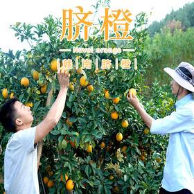 【预售】华农兄弟赣南脐橙江西脐橙现摘现发 20斤装