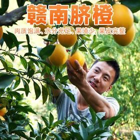【预售】华农兄弟赣南脐橙江西脐橙现摘现发 5斤装